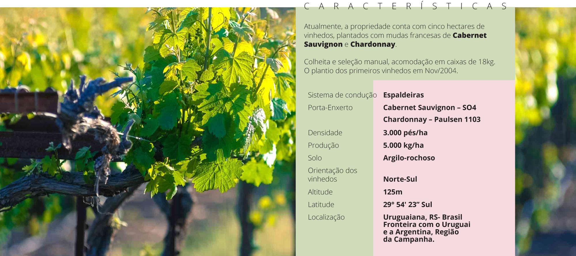 Características vinhos Bodega Sossego